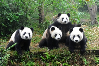 Extension tour: Chengdu 2 Nights Tour (Domestic Airfare Excluded)